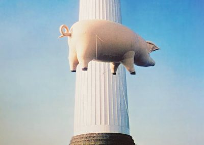 Pig  for Pink Floyd Animals Cover