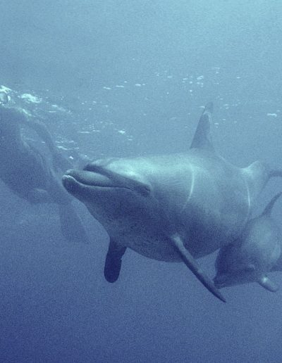 Swimming with mother and baby.